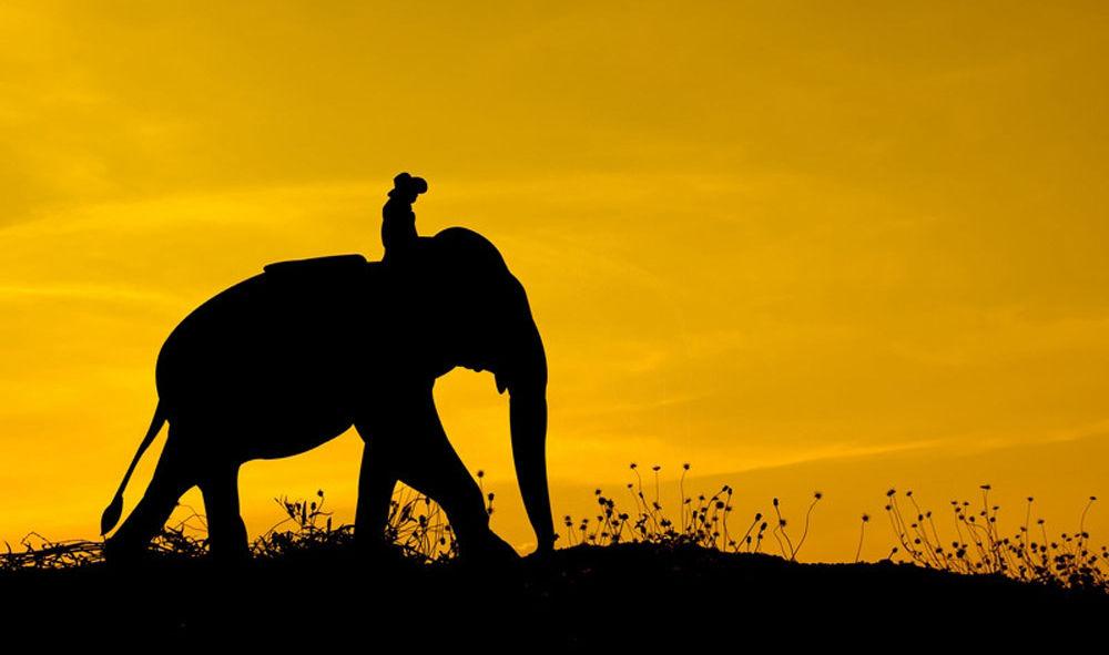 pendleton elephant rider header