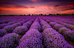 code lavender