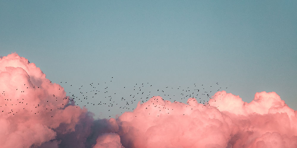 pink clouds and birds header