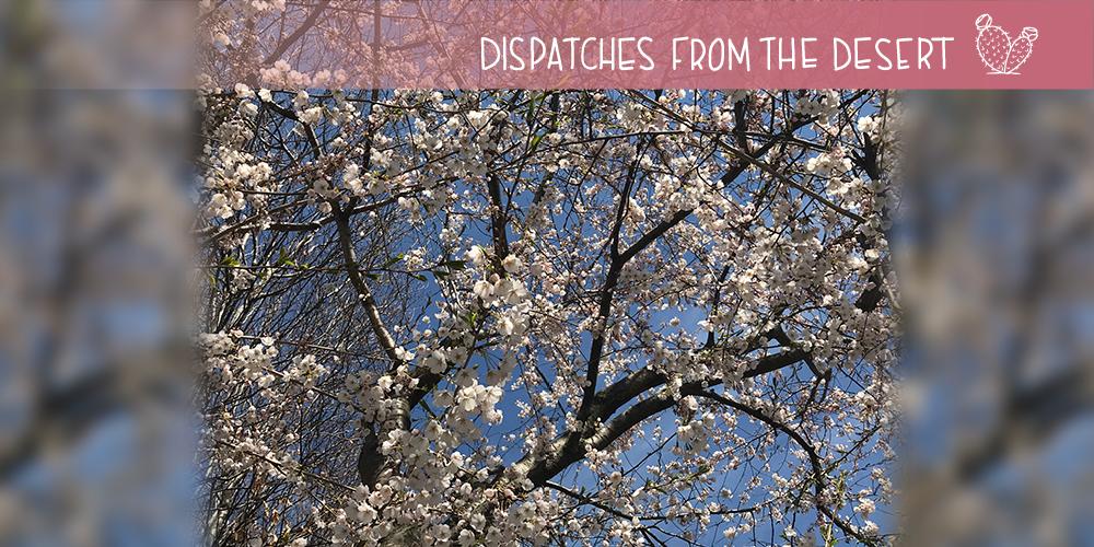 cherry blosson header