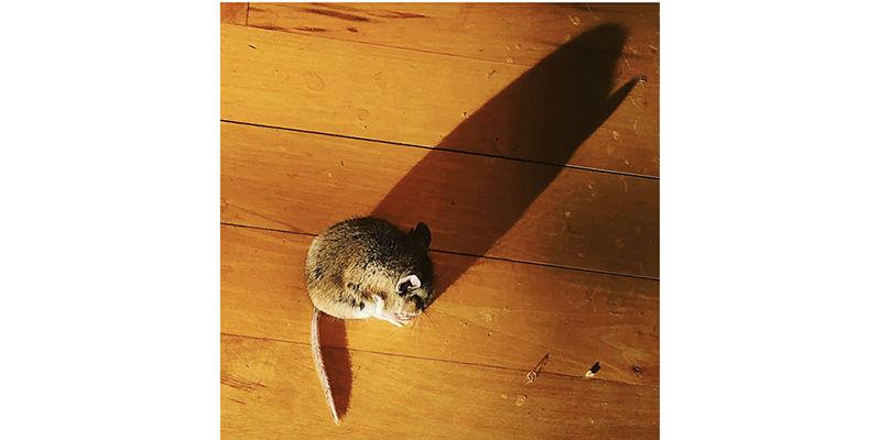 mouseborder